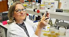 Cientista portuguesa participa em estudo pioneiro sobre diabetes